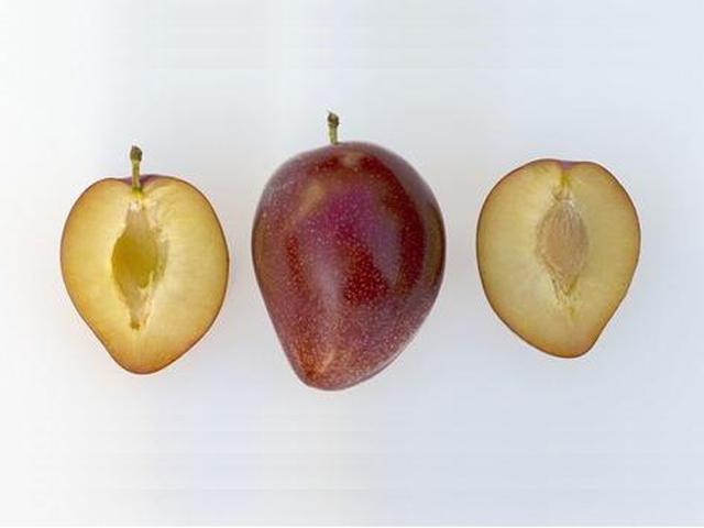 plody-svg