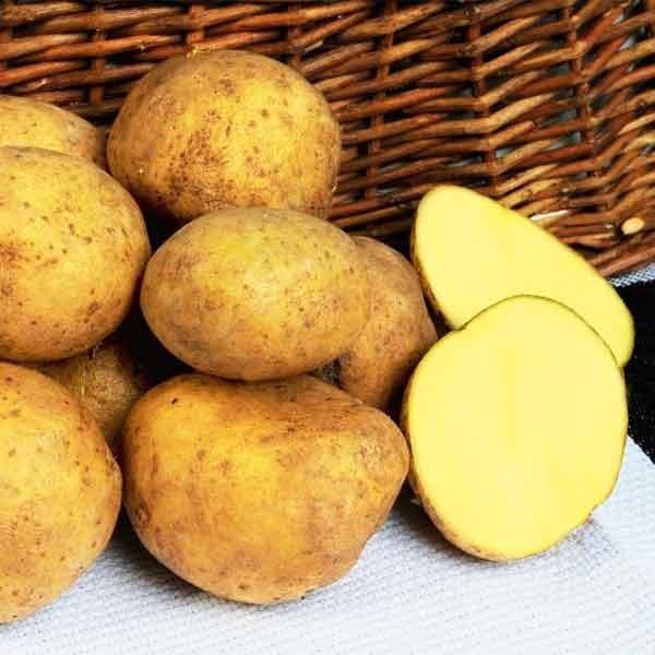 kartofel-adretta