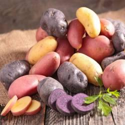 Купить семенной картофель на весну с доставкой по России. Описание сортов, фото.